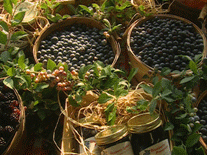 blueberry_hill_farm